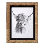 Framed Print - Highland-Cow